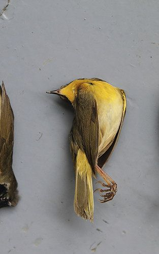 """the death of the bird by a.d.hope essay Ad hope – death of a bird published by admin on january 27, 2018 how has ad hope used language to construct meaning in """"death of the bird"""" papers mkt 421."""