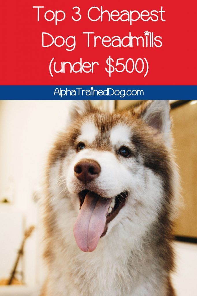 Looking For The Best Cheap Dog Treadmills I Ve Got You Covered Check Out The Top 3 Models Under 500 Cheap Dogs Dogs Dog Training