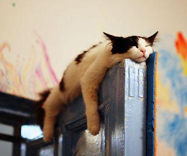 Katten kunnen overal slapen. Meer weten over katten? Lees Duh Katten! https://itunes.apple.com/us/book/duh!-katten/id593499485?mt=11 Ook superhandig voor je spreekbeurt of werkstuk trouwens!