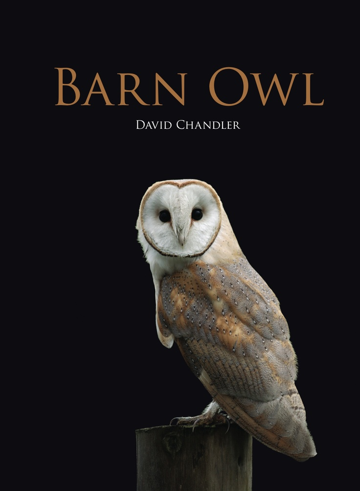 Love barn owls