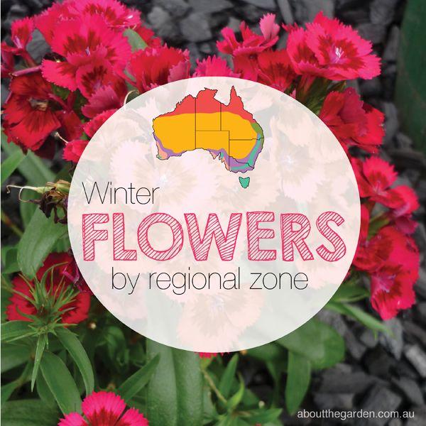 Winter Flower Guide by regional zone aboutthegardenmagazine