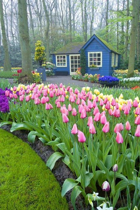 cottage & tulip garden in the woods