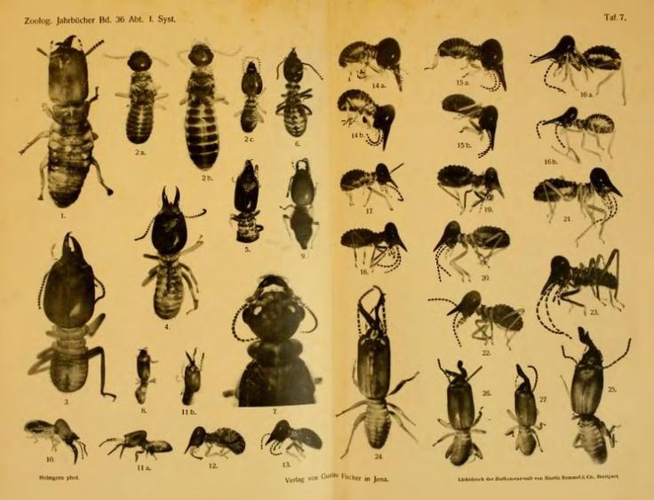 Wissenschaftliche Ergebnisse einer Forschungsreise nach Ostindien, ausgeführt im Auftrage der Kgl. Preuß. Akademie der Wissenschaften zu Berlin von H. v. Buttel-Reepen. III. Termiten aus Sumatra, Java, Malacca und Ceylon gesammelt von Herrn Prof. Dr. v. Buttel-Reepen in den Jahren 1911—1912 - BioStor