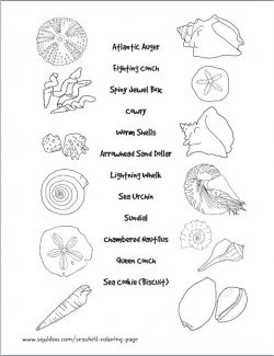 57 best Seashell identification (around the world) images
