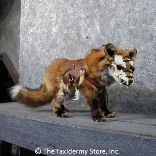 38 Best Images About Unique Taxidermy On Pinterest