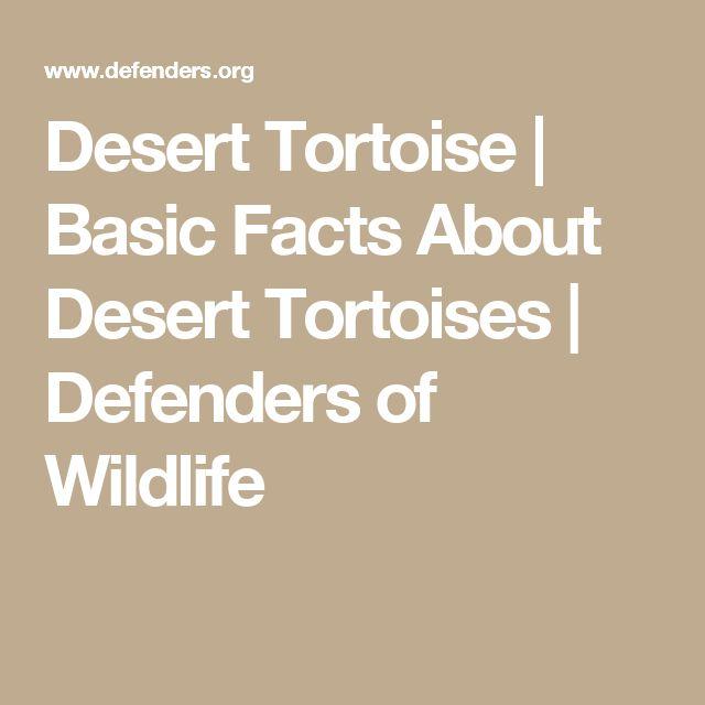 Desert Tortoise | Basic Facts About Desert Tortoises | Defenders of Wildlife