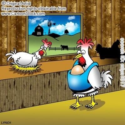 Babywearing chickens :)