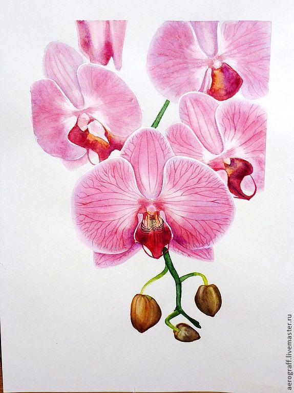 Изобр по > Орхидея Рисунок Акварелью