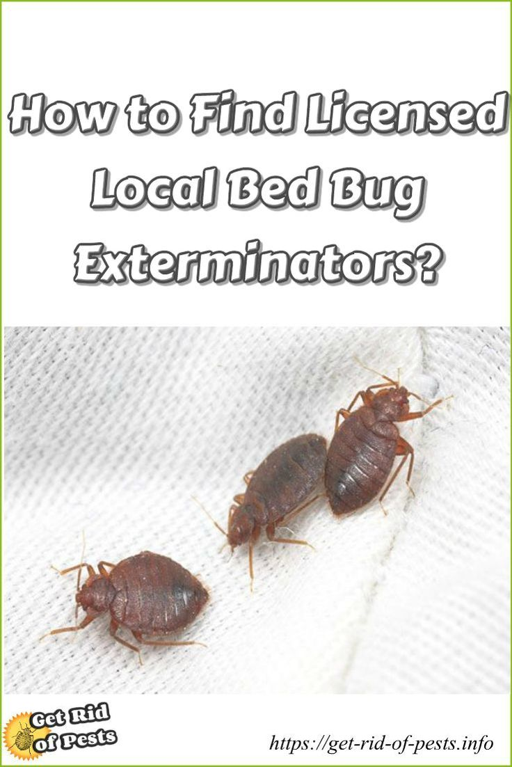 10 best fabriclear bed bugs images on pinterest 3 4 beds bed