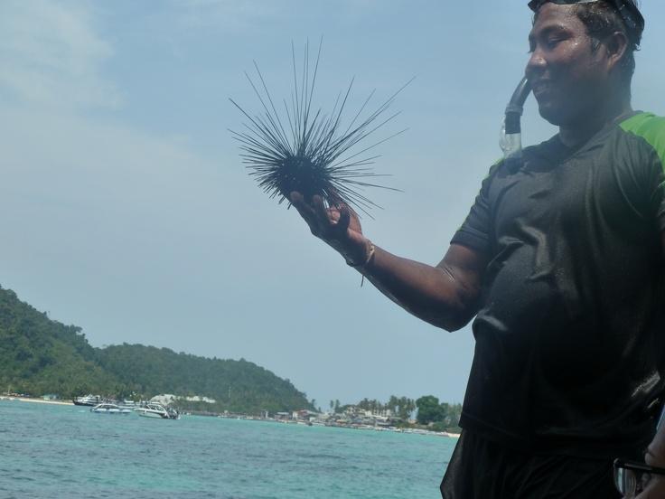 sea creature on boat