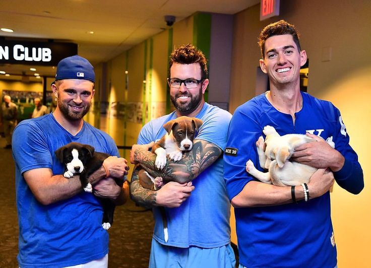 "11.8k Likes, 32 Comments - Kansas City Royals (@kcroyals) on Instagram: ""There's no party like a puppy party.  #BarkAtThePark"""