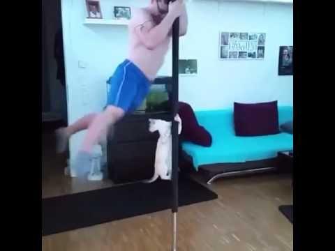 Direk Dansı ustası kedi