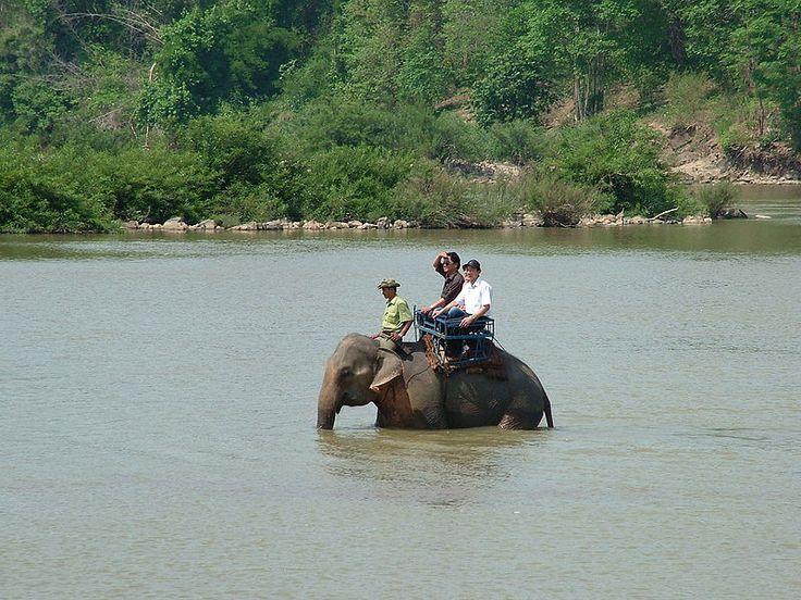 Vietnam Jungle