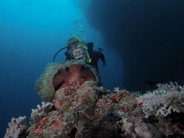 Diver and anenome