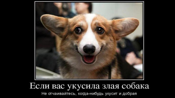 ТОП Самые Смешные демотиваторы про собак Видео демотиватор youtube смех ...