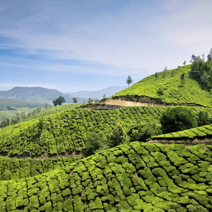 India sky green grass mountainous landforms Nature agriculture field tea mountain hill plantation valley rural area landscape mountain range leaf plateau Terrace flower beverage lush pasture grassy hillside day highland