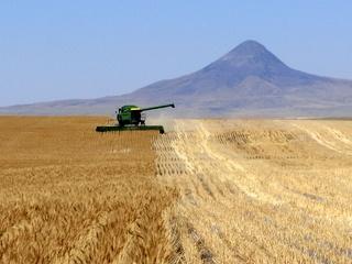 Harvest  Shelby, Montana