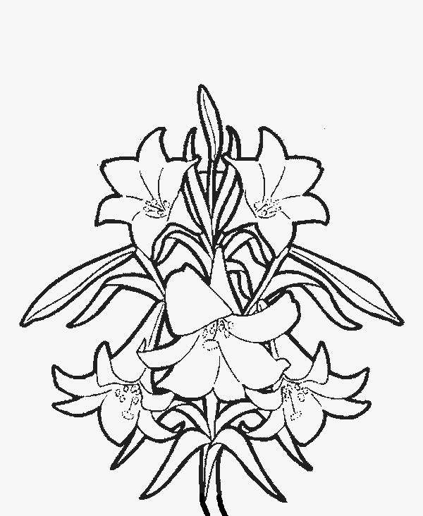 265 Best Flower Pic Images On Pinterest Printable Coloring - coloring pages flowers and trees