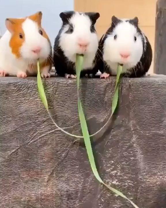 Synchronized monching!
