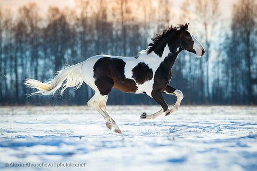 Tumblr ... scarlettjane22: Alexy KHRUSHCHOV equestrian photography