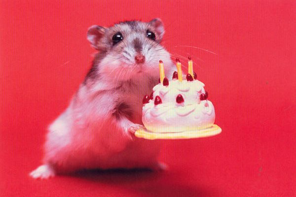 Hamster Holding Birthday Cake