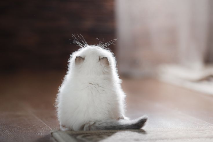 35PHOTO - Анна Аверьянова - Нежные котята