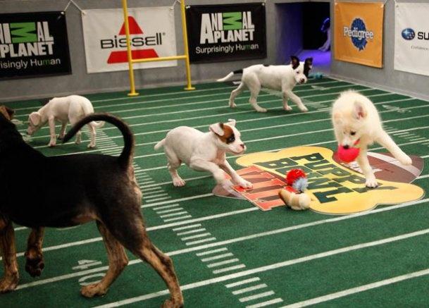 Puppy Bowl IX Starting Lineup: Photos: Animal Planet