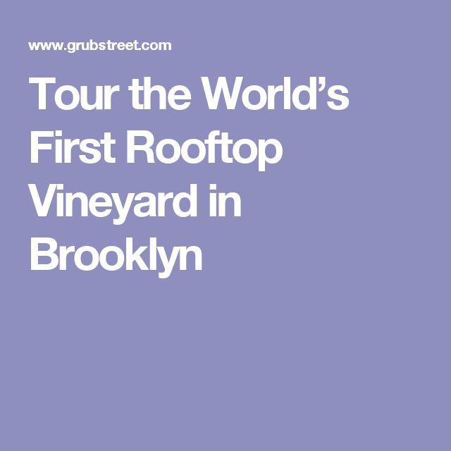 Tour the World's First Rooftop Vineyard in Brooklyn