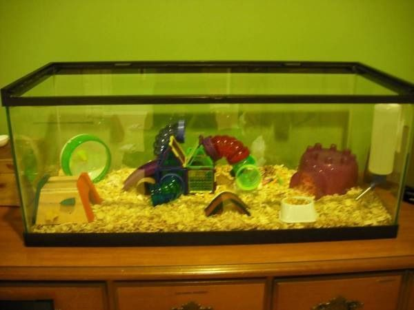 Aquarium For Hamster Cage