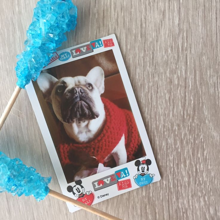 perfect for capturing magical moments. Like your dog wearing a sweater. Magic.