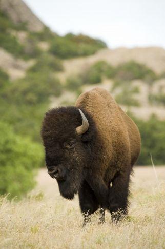 Wichita Mountains Wildlife Refuge in Lawton, OK