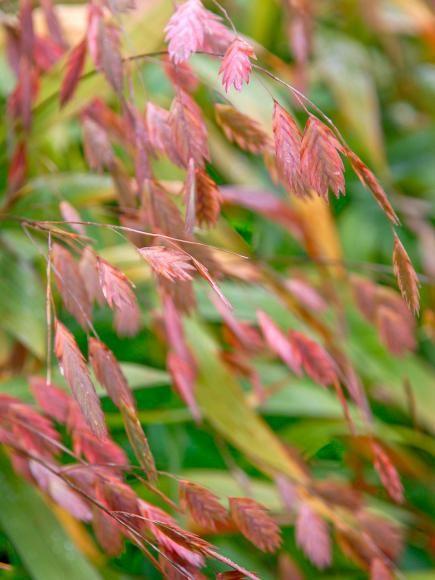 best 25  best grass seed ideas on pinterest