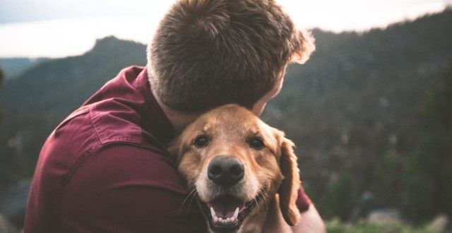 10 Ways To Honor Your Dog S Memory When They Pass Pets Dog