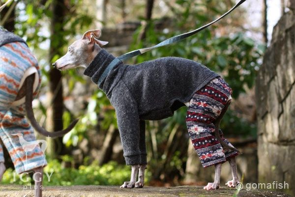Native pattern Pants / Navy Red in IGGYplus italian greyhound clothes