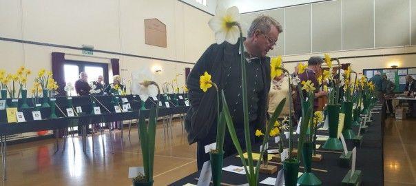 Daffodils Archives - Pumpkin Beth