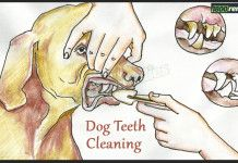Home Remedies For Dog S Bad Teeth