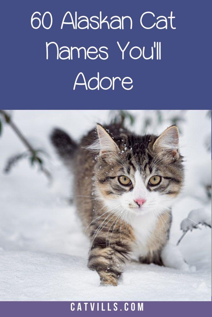 Top 60 Most Beautiful Alaskan Cat Names You Ve Ever Heard Catvills In 2020 Cat Names Cats Cute Cats And Kittens