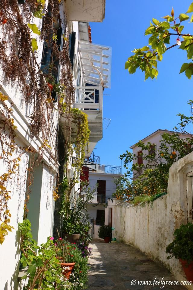 House overwhelmed by flowers; photo from Skopelos Town, Skopelos