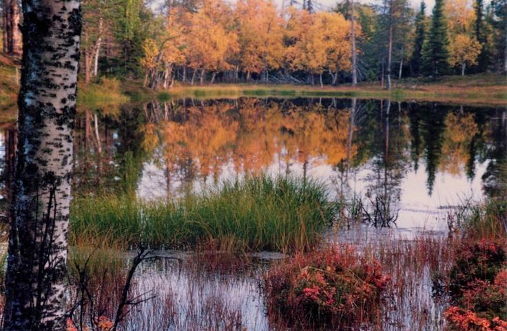 Lapland - Kukasjärvi