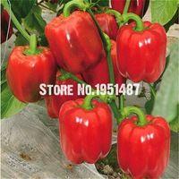 Сладкие семена красного перца семена Балкон Герметичный Семена растений Органические Чили 100 частиц комнатным растением садовые растения