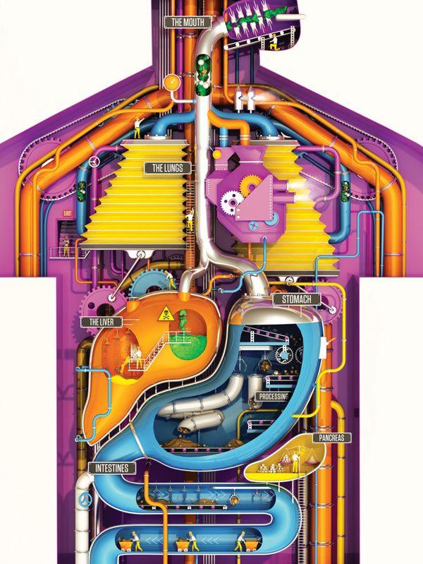 Een mechanische weergave van de verwerking van voedsel in het lichaam. Met, bij de doorklik, meer gedetailleerde plaatjes. #weereenswatanders