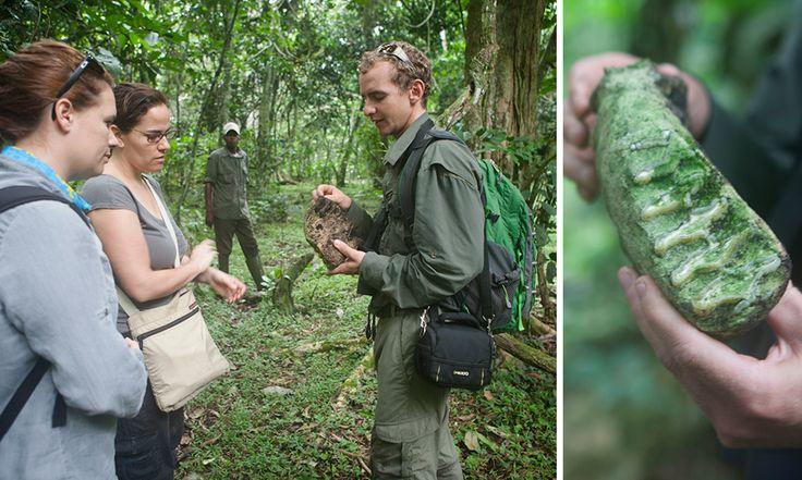 Exploring Lango Bai in Odzala National Park, Republic of Congo. #Africa #Congo #travel #RepublicofCongo #gorilla #trekking #jungle #WildernessSafaris