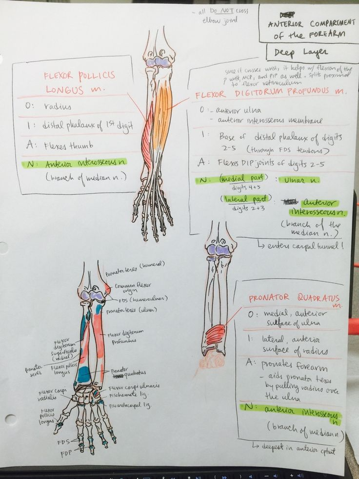 494 best Anatomy images on Pinterest | Pa school, Medical school and ...
