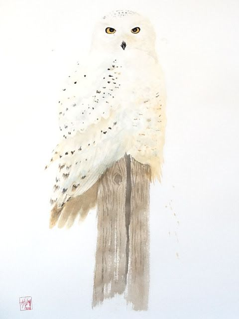 WILDLIFE ARTIST Hilmi Simsek / Kar Baykuşu / Snow Owl / Watercolor(76×56cm)/ #karbaykuşu #snowowl #owl #watercolor #painting #artandecology #scientificillustration #wildlifeart #wildlifeartist #byhilmişimşek #animallover #bird #kings_birds