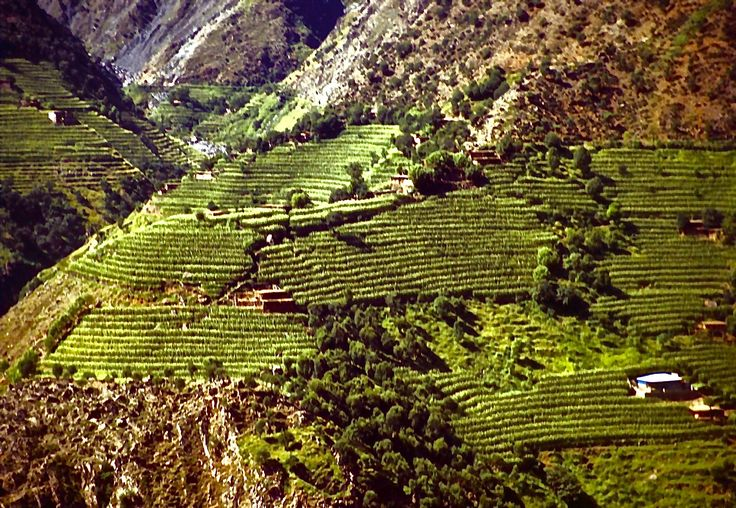 Vallée de Hunza / Pakistan / jcp 1992