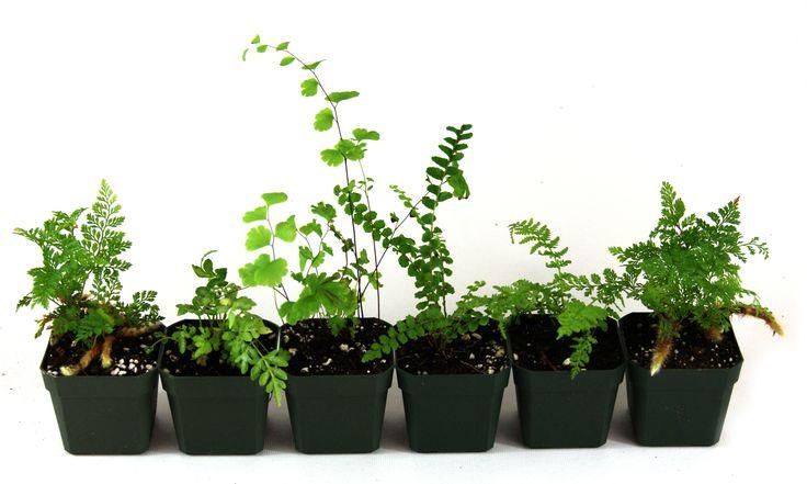 Terrarium Plant Bundle (10 plants) | Josh's Frogs