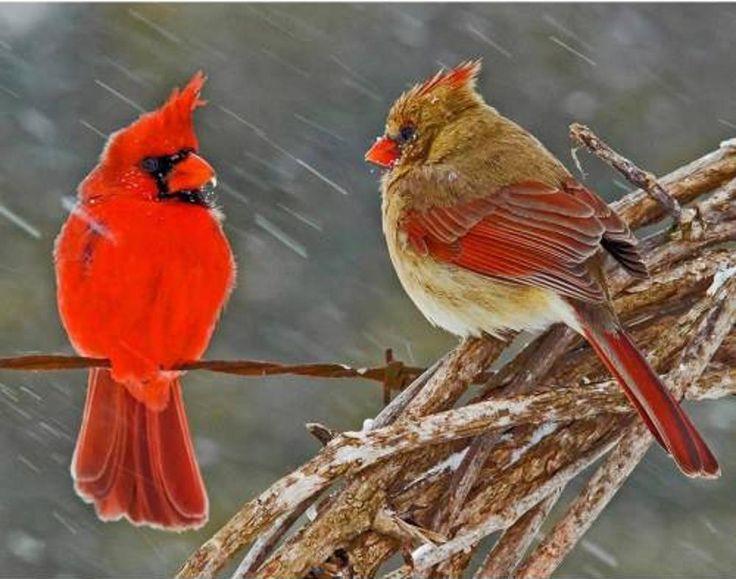 277 Best Images About Birds