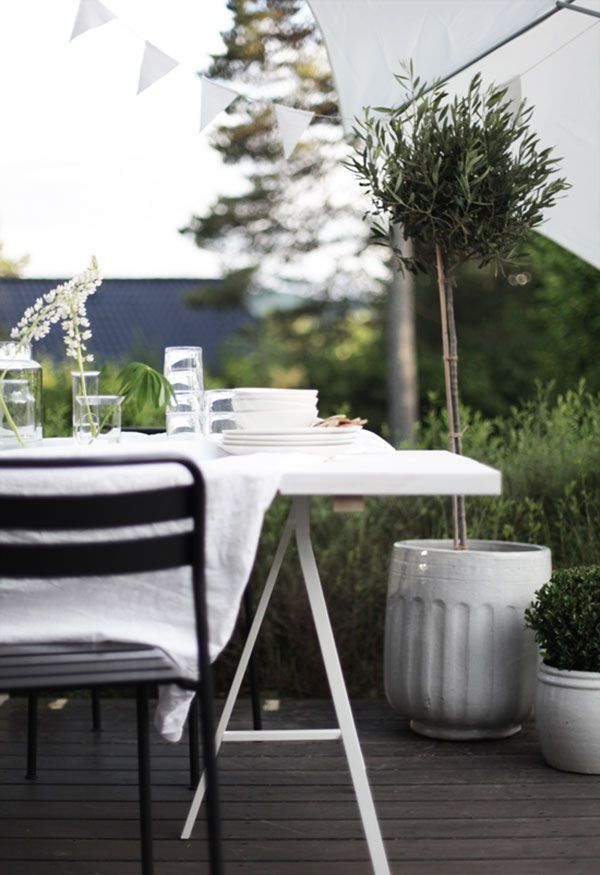 Dark decking, little trees in white pots