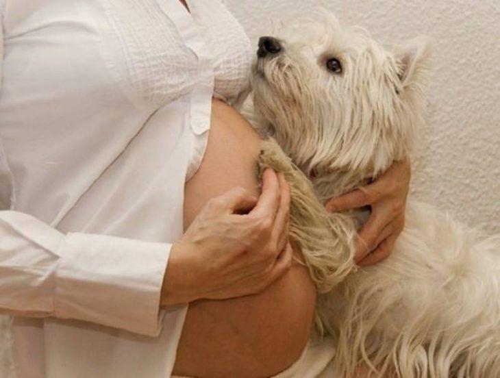 20 Adorables Fotos De Perros Que Esperan Con Ansias La Llegada De Un Bebé En 2020 Fotos De Perros Cuadros Del Perro Perros