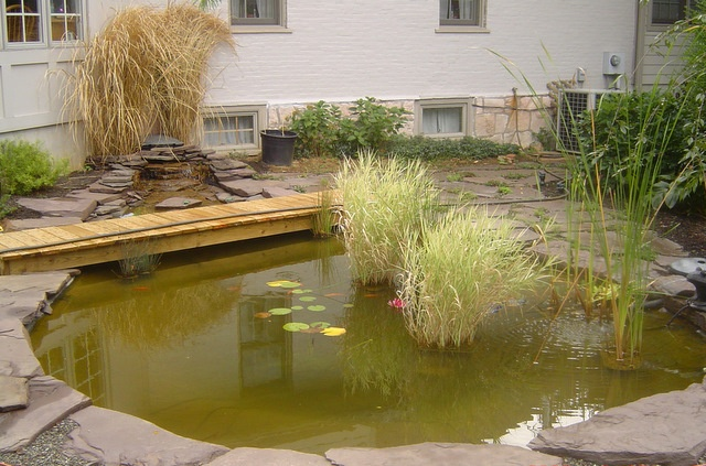 27 best backyard pond and creek ideas images on pinterest for Koi pool water gardens thornton
